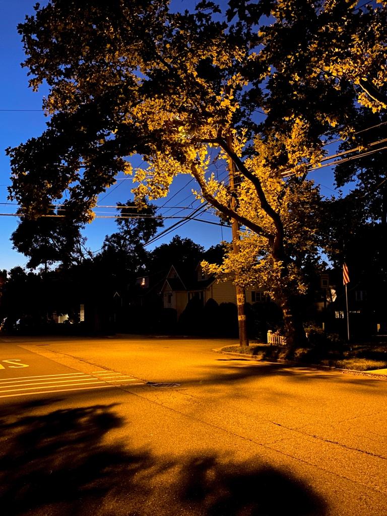 Evening Walk, Cintia Malhltra